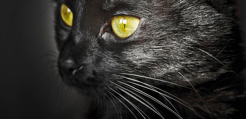 gato-olhos-amarelos